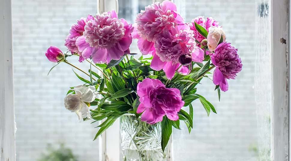 Fresh flowers are one of the luxuries the Sydney nurse likes to have in her house. Picture SuppliedSourceSupplied