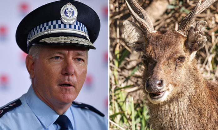 Two nude sunbathers got ... y a deer, police say